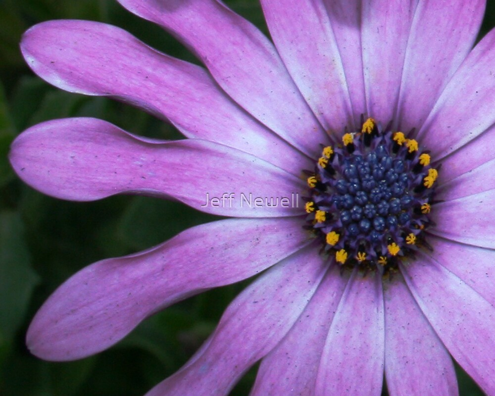 Purple Explosion by Jeff Newell