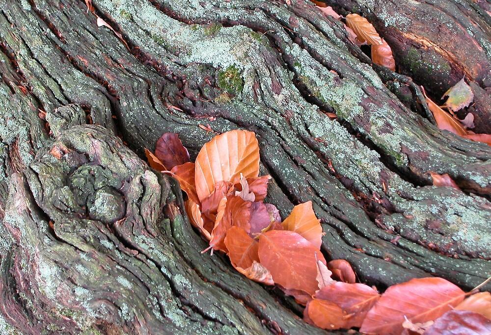 Beech Leaves by Geoff Spivey