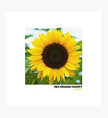SUNFLOWER-REX ORANGE COUNTY Photographic Print