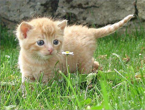 kitten by mardel09