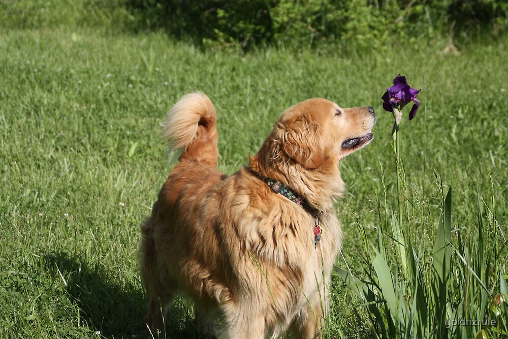 Take time to smell the flowers '09 by goldnzrule