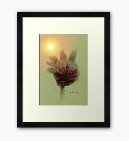 The Warm Up Framed Print