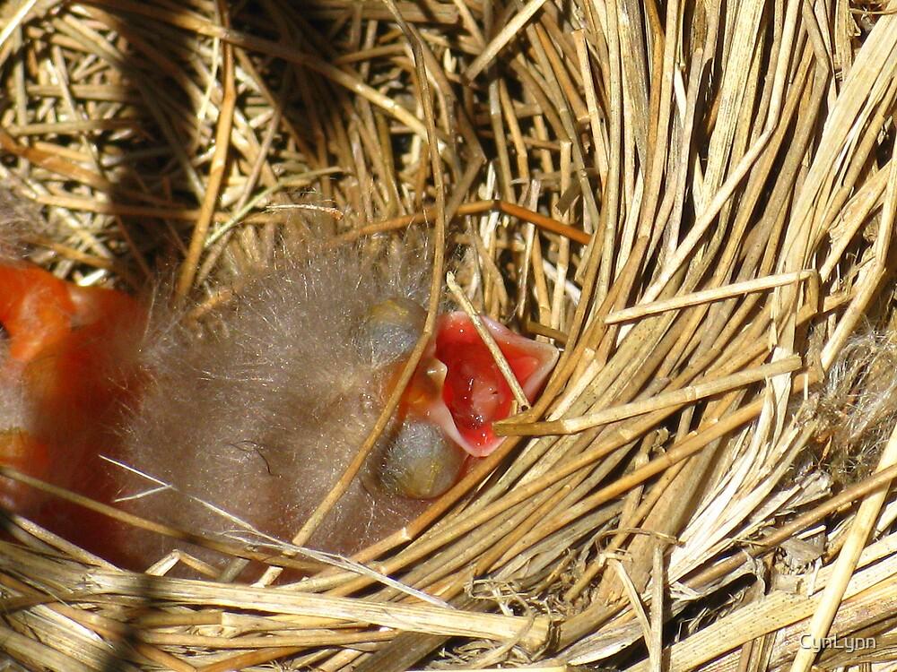 Baby Redwinged Black Birds Day 2 #1 by CynLynn