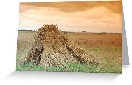 Wheat sheaves by woolleyfir