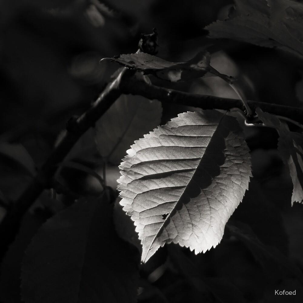 Sweet Leaf by Kofoed