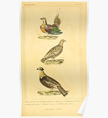 The Animal Kingdom by Georges Cuvier, PA Latreille, and Henry McMurtrie 1834 708 - Aves Avians Birds Poster