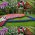 A Dutch Spring Collage - Keukenhof Gardens by Kathryn Jones