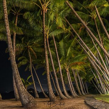 Palm Cove by Night by MattBradfield