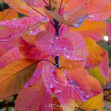 Autumnal tree raindrop by MattBradfield