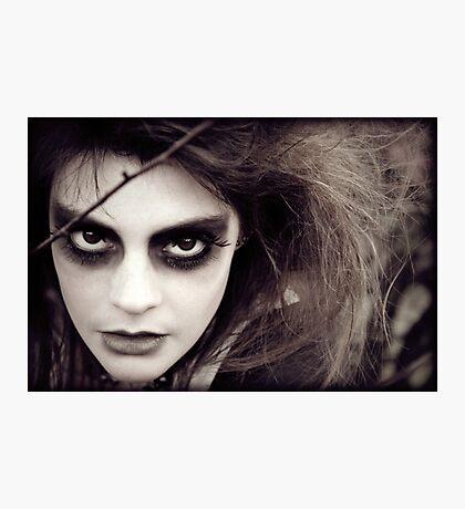 The Ravens Rag Doll Photographic Print