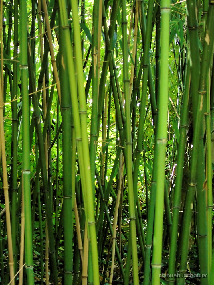 Bamboo by chihuahuashower