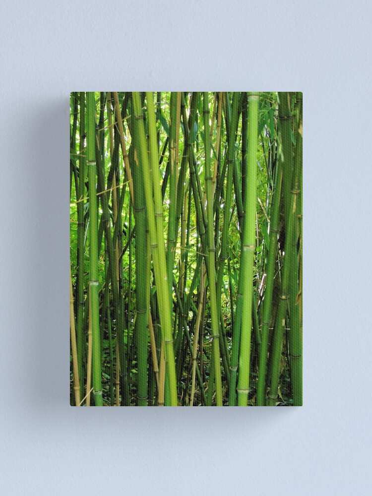 Alternate view of Bamboo Canvas Print