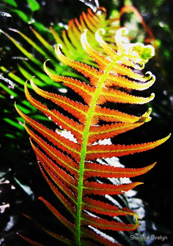 Prickly rasp Fern by Sherilee Evelyn