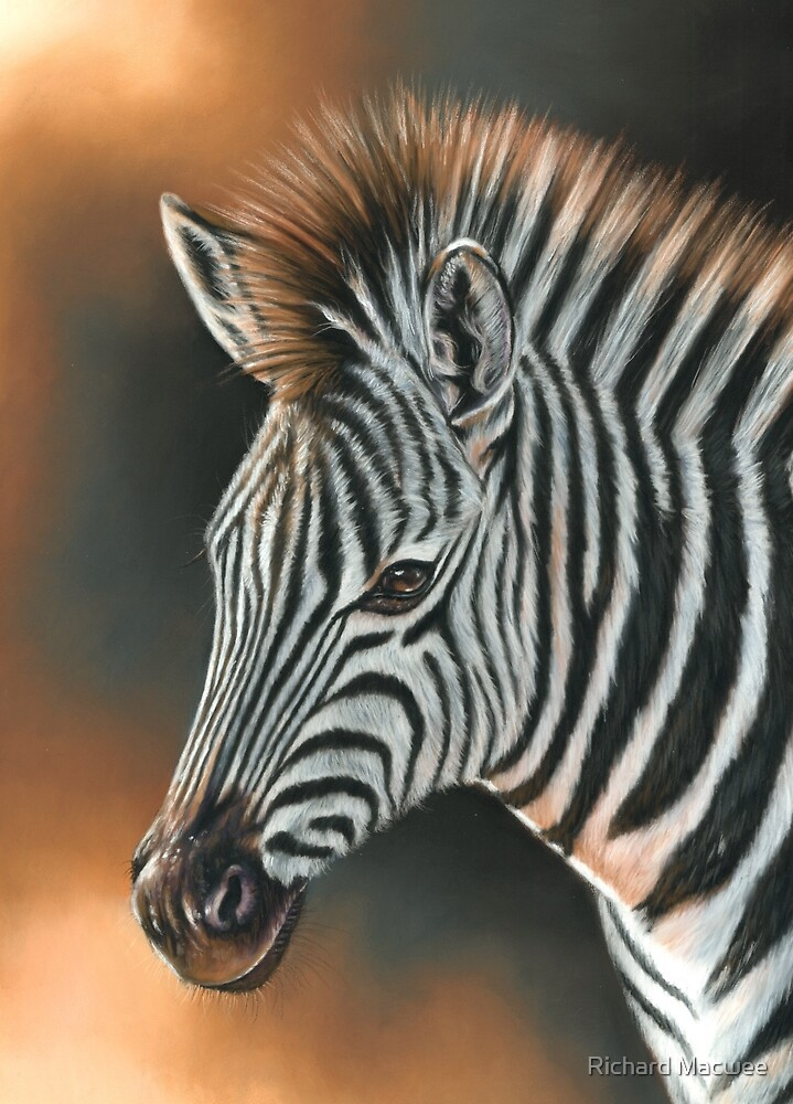 Zebra by Richard Macwee