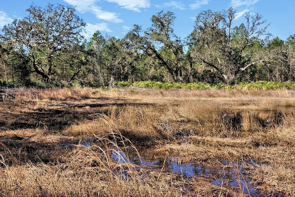 Woods And Wetlands 2 - Florida by jtrommer