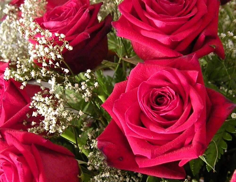 Red Roses by pics