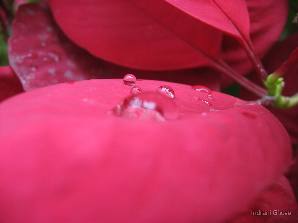 Drops from Heaven! by Indrani Ghose