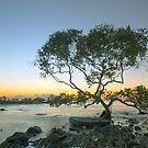 Lone Mangrove by Peter Doré