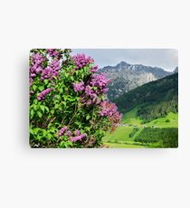 Lilac tree with the Austrian Alps on the background Canvas Print