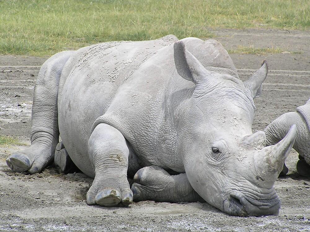 White Rhino by Kellie Scott