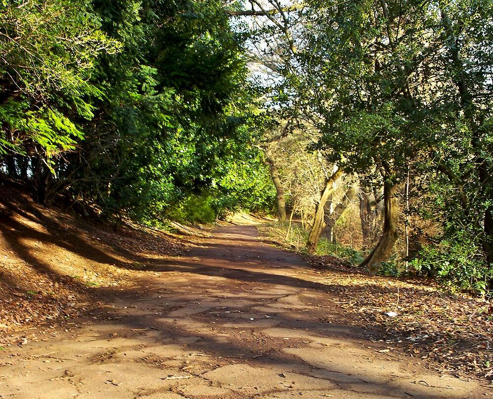 Shadowed path by bev0191
