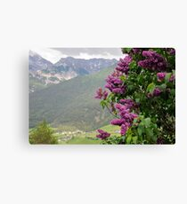 Lilac tree and the Austrian Alps Canvas Print