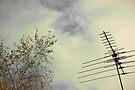 rhythm and melody by aglaia b