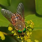 Gold & Green Eyes by Robert Abraham