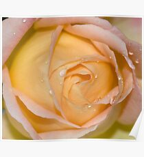 A rose with raindrops  Poster