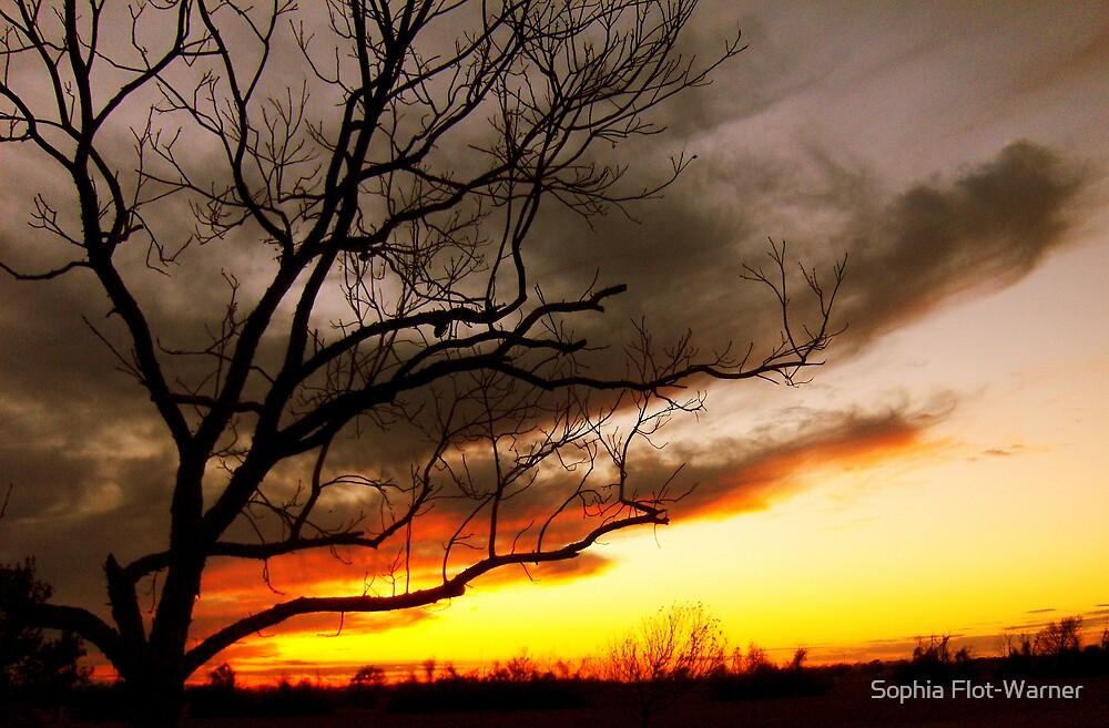 Trace the Horizon by Sophia Flot-Warner