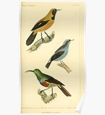 The Animal Kingdom by Georges Cuvier, PA Latreille, and Henry McMurtrie 1834 689 - Aves Avians Birds Poster