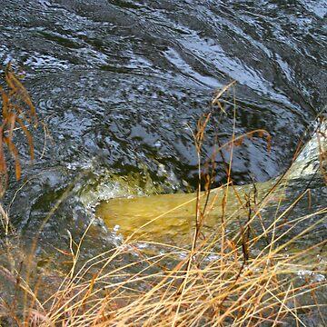 Water rushing by kaety