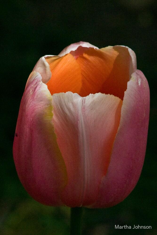Tulip 1 by Martha Johnson