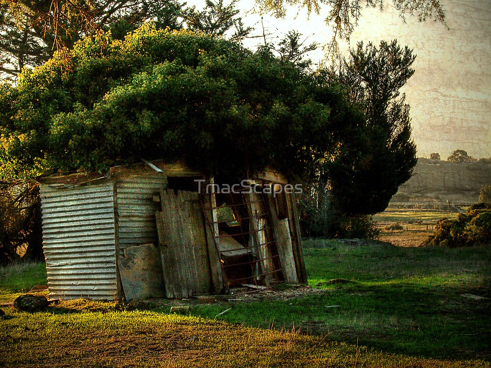 Treechange by TmacScapes