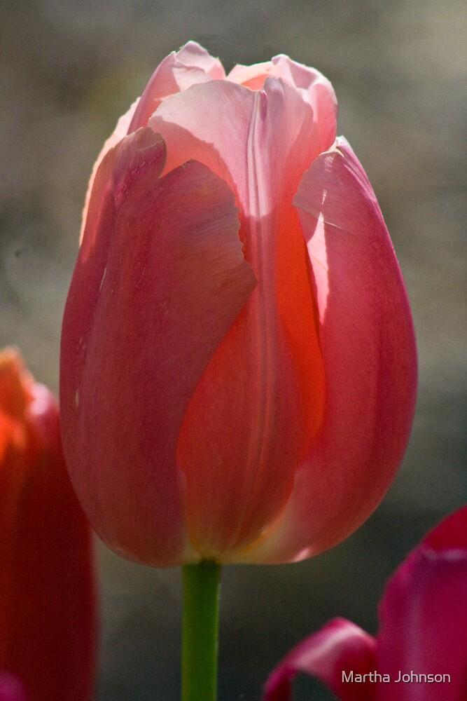 Tulip 7 by Martha Johnson