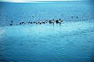 Seabirds by Extraordinary Light