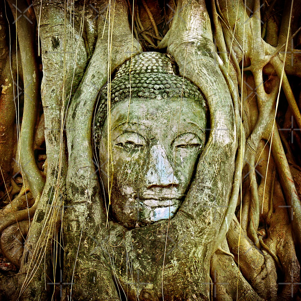 Buddha's head picked up by tree roots by paulgrand