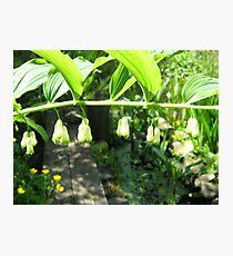 Plant close-up Photographic Print