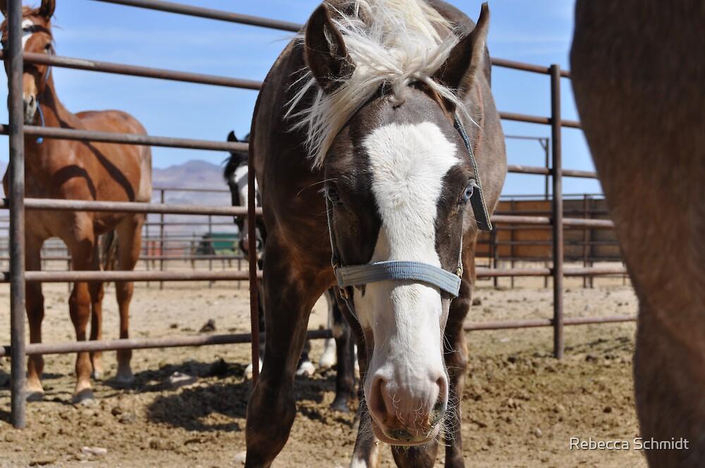 Halter Project Mustang by Rebecca Schmidt