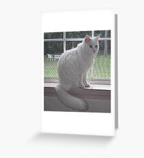 Tosh the Cat Greeting Card