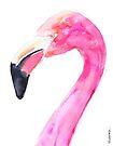 Flamingo by Kendra Shedenhelm