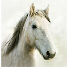 White Horse Head Portrait by jacqi