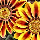 Sunshine Blooms by Sheri Nye