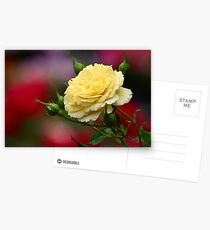 The Yellow Rose Postcards