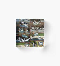 World of Pelicans Acrylic Block