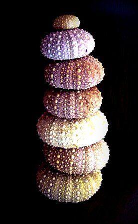 Sea Urchin Tower by fluttering
