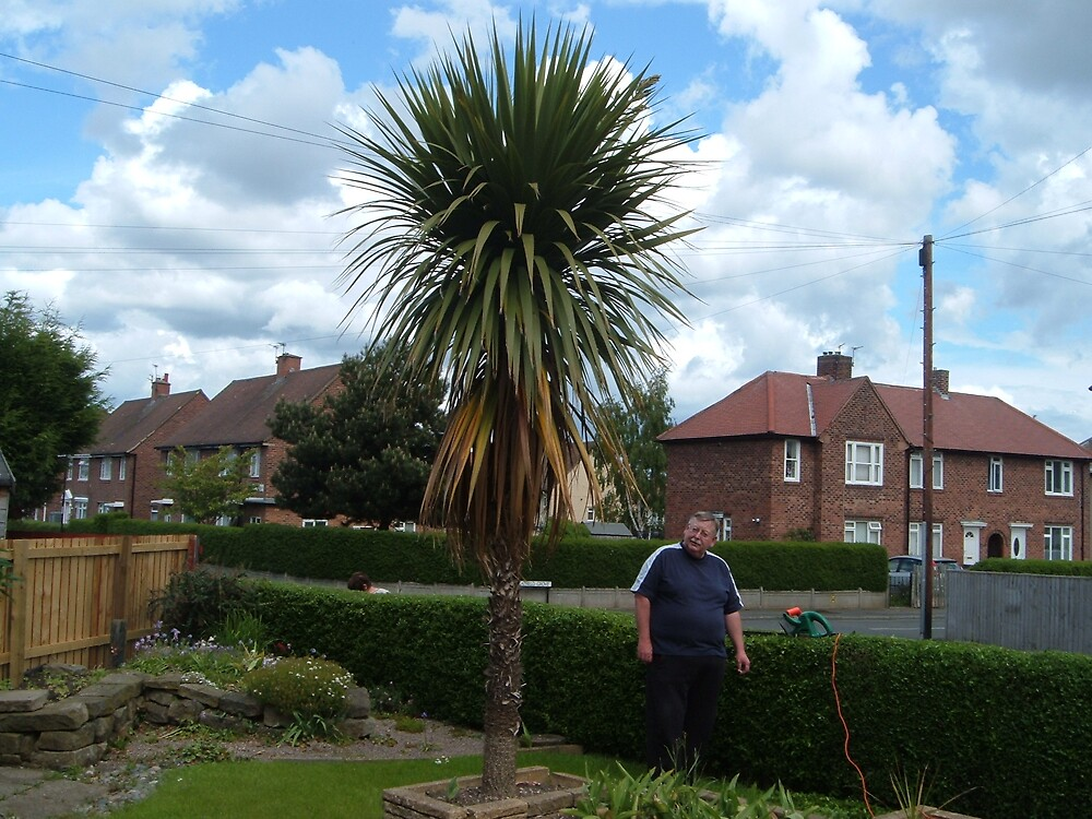 Palm tree and me at 55degrees north by GEORGE SANDERSON