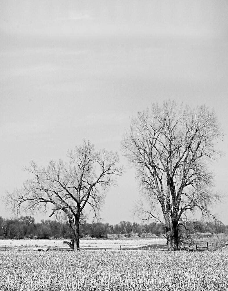 Black and White of Trees by Tony Weatherman