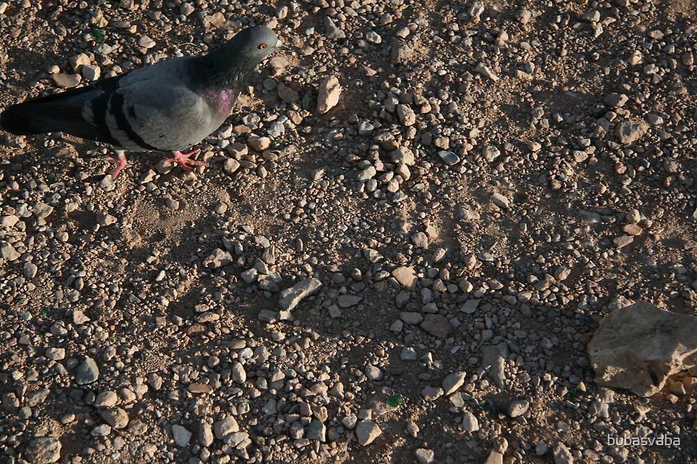 ground dove by bubasvaba