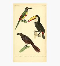 The Animal Kingdom by Georges Cuvier, PA Latreille, and Henry McMurtrie 1834 706 - Aves Avians Birds Photographic Print